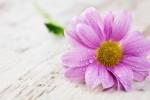 semnificatia florilor pe care le primesti