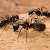 ce inseamna cand visezi furnici