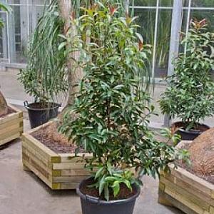 Plantele de interior prin frumusetea lor aduc zambetul for Plante de interior